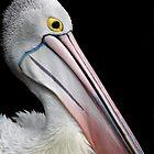 Pelican by Maureen Clark