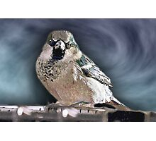 And Your Bird Can Sing Photographic Print