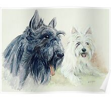 Scottie and a Westie Poster