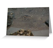 Oyster Shells And Rocks Greeting Card