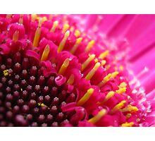 Candles in the Gerbera Photographic Print