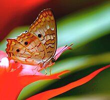 Winged Flower by Ruby  Pen