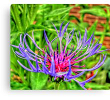 Macro flower different shot Canvas Print