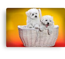 Two cute white puppies in white basket on orange and yellow background  Canvas Print