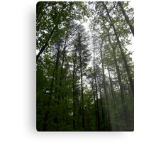 Prince William National Forest 1 Metal Print