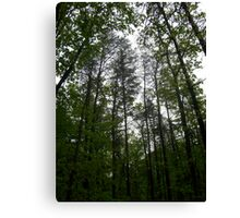 Prince William National Forest 1 Canvas Print
