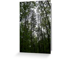 Prince William National Forest 1 Greeting Card