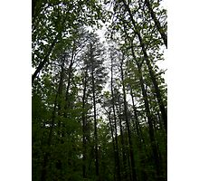 Prince William National Forest 1 Photographic Print
