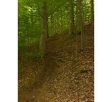Prince William National Forest 2 Photographic Print