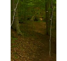 Prince William National Forest 3 Photographic Print