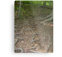 Prince William National Forest 4 Metal Print