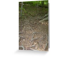 Prince William National Forest 4 Greeting Card
