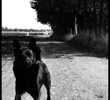 Crazy dog by nyferates