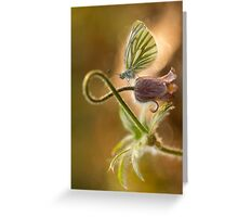 Morning impression with pasque flower and small butterfly Greeting Card