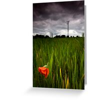 lone poppy Greeting Card