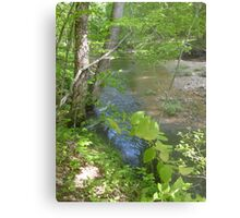 Prince William National Forest 8 Metal Print