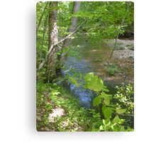 Prince William National Forest 8 Canvas Print