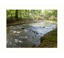 Prince William National Forest 9 Art Print