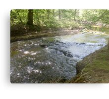 Prince William National Forest 9 Metal Print