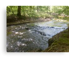 Prince William National Forest 9 Canvas Print