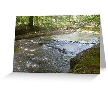 Prince William National Forest 9 Greeting Card