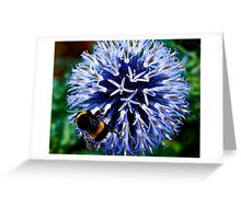 Echinops ritro and Bee Greeting Card
