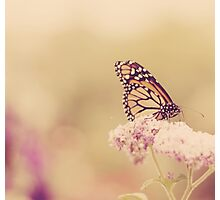 Flutterbye Photographic Print