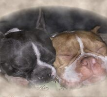 Boston Terrier Love by Kar4470