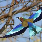 Lilac Breasted Roller by Debbie Schiff