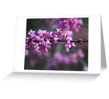 Red Bud Greeting Card