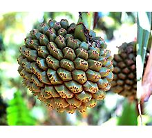 Nature's Disco Ball - Hala Photographic Print