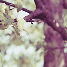 Spring lifts up our souls by Isabelle Lafrance