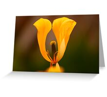 Undressed Tulip Greeting Card