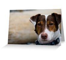Jack our Russell Greeting Card