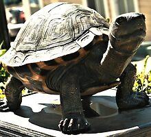 Big Turtle by terrebo