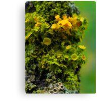 Alien Lichen Landscape Canvas Print