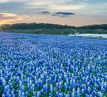 Bluebonnet Sunrise by Tod and Cynthia Grubbs