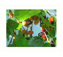 Backyard Wild Berries (1) Art Print