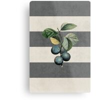 botanical stripes - plums Metal Print