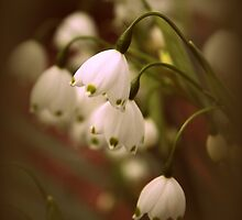 Snowdrops by Jessica Jenney