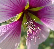 Purple Hibiscus? by Linda Scott