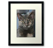 Kitty Kat Framed Print