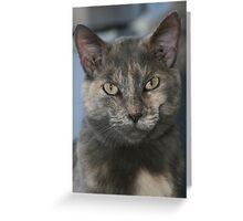 Kitty Kat Greeting Card