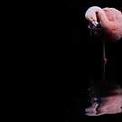 Pink by Natalie Manuel