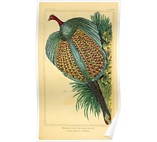 The Animal Kingdom by Georges Cuvier, PA Latreille, and Henry McMurtrie 1834 720 - Aves Avians Birds Poster