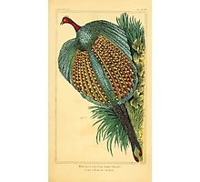 The Animal Kingdom by Georges Cuvier, PA Latreille, and Henry McMurtrie 1834 720 - Aves Avians Birds Photographic Print