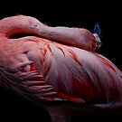 Flamingo Dance by Natalie Manuel