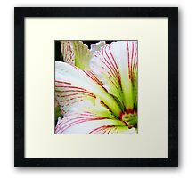 Sweetness of the Petals Framed Print