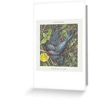 Caddywhompus - Feathering A Nest Greeting Card
