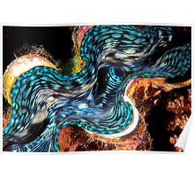 Giant Clam Poster